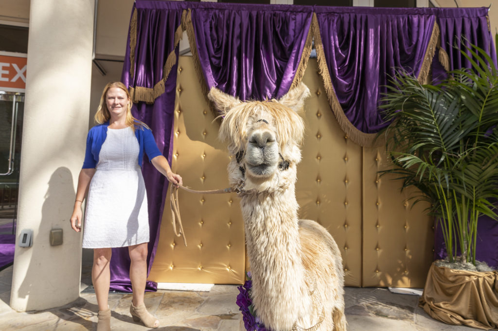 The one and only Albert the Alpaca returns to Mayor Riggle's side